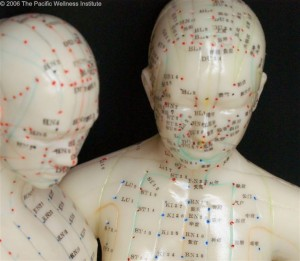 Teaching Aide for Learning Acupuncture